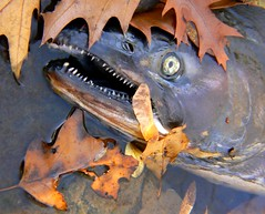 Cute Fish 1 0f 2 (-dangler) Tags: park fish ny eye fall nature rotting beautiful face leaves monster tongue creek mouth dead colorful peekaboo teeth allens scenic glen rochester nostril gore ugly doom trout wny corbetts