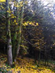 Fallen (haikus*) Tags: autumn trees light fall forest orton abigfave theenchantedcarousel