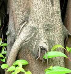 Singapore (balavenise) Tags: pareidolia eyes singapore yeux singapour pareidolie faceperception weseeeyes