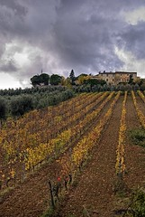 Vigna a Montalcino