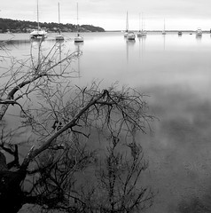 Branching out (pominoz) Tags: lake reflection tree boats blackwhite branch nsw thumbsup lakemacquarie twothumbsup arcadiavale thumbsupwrestling tuw121
