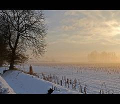 "Fog, snow ...... and cold !! (alfvet) Tags: snow sunrise nikon alba natura neve 1001nights lombardia vigevano d60 potofgold parcodelticino totalphoto mywinners abigfave platinumphoto superaplus aplusphoto theunforgettablepictures platinumheartaward paesaggipppavia veterinarifotografi damniwishidtakenthat obq goldenheartaward lesamisdupetitprince flickeestrellas flickrclassique ""flickraward"" sailsevenseas flickrstruereflection1 flickrstruereflection2 flickrstruereflection3 flickrstruereflection4 flickrstruereflection5 flickrstruereflection6 flickrstruereflection7 flickrstruereflectionexcellence"