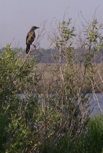 Bird by the Estuary