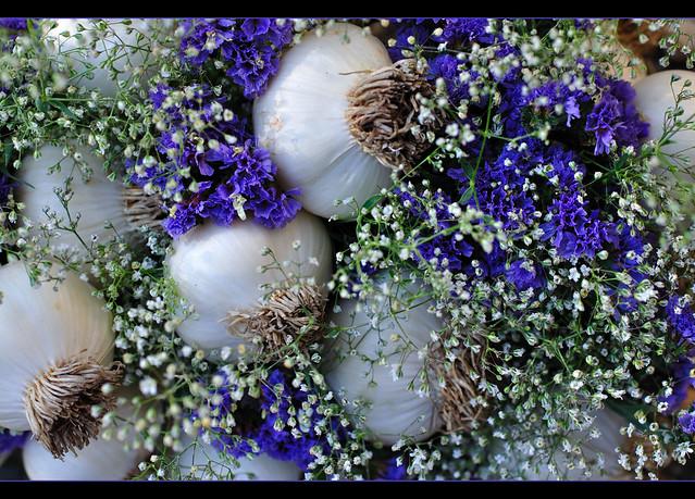 From the garden ~ Garlic Harvest