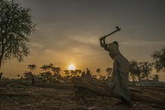 Día Internacional de la Mujer 2014 (AcnurLasAméricas) Tags: africa women southsudan firewood sudaneserefugees
