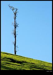 alone (sash/ slash) Tags: sash sajesh malayalikoottam kfm3 kfm03 valppara flickrmeet03 feb2324