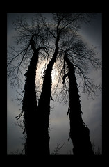 Black Rainbow (Alicia Lynn) Tags: usa sun black tree nature fauna wisconsin dark outdoors grey wildlife heartland northamerica 2008 wi catchycolorsblack canonxti outagamiecounty cmwdblackandwhite friendlychallenges canonrebelxti alicialynncook northamerica