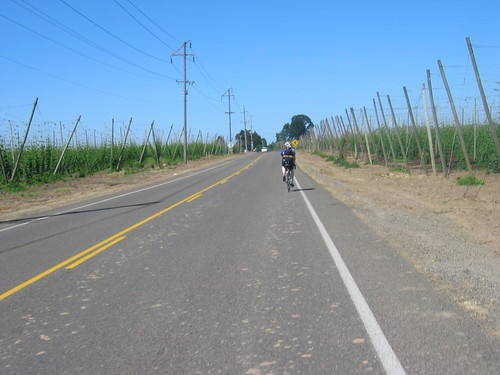 Jason riding through the hops on Case Rd