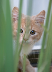 Tiger in the Jungle (photog_by_scott) Tags: plants cats cute cat garden fur furry kitten feline whiskers meow paws pounce claws sneak