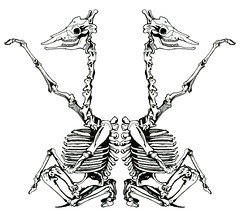 Twins (nathankail17) Tags: life wild rock dead skeleton death mirror twins siamese giraffes bones giraffe connected iamyou