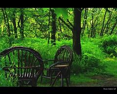 Near my wild river... my green living room...!!! / Près de ma rivière sauvage... mon salon vert...!!! :)))
