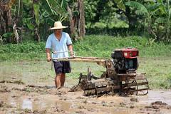 Ka Gerry (JP Dela Paz) Tags: farm farmer handtractor