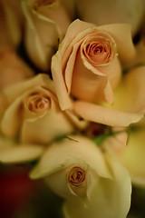 bokeh (VanMagenta) Tags: brazil flower closeup brasil canon anne 50mm flickr bokeh marriage filter bouquet casamento marry buque vanmagenta lesamisdupetitprince