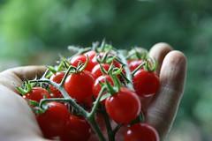 [フリー画像] 食べ物・飲料, 野菜, トマト, 手, 201102181700