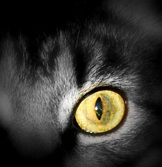 Golden Eye (fromme62) Tags: bw cats office nikon modified manager d40x smrkat