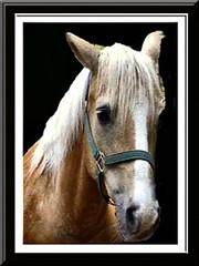 ROCKIN' HORSE CORRAL & friends