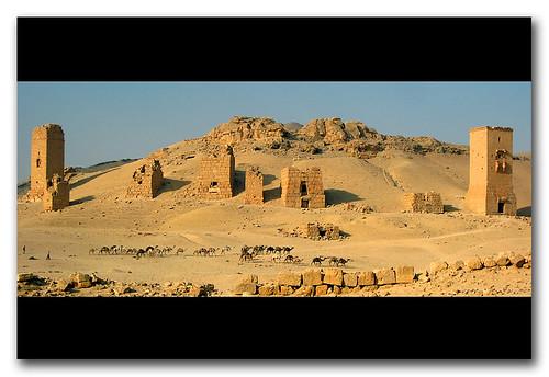 manada de camellos, Palmira