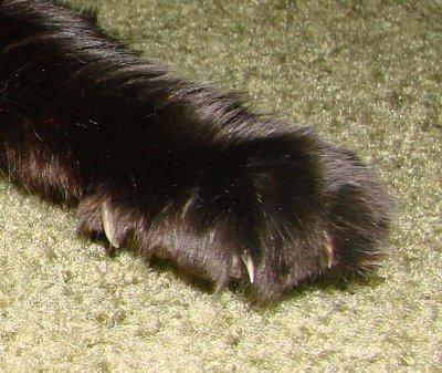 WCB171: pepi-clawsofdoom