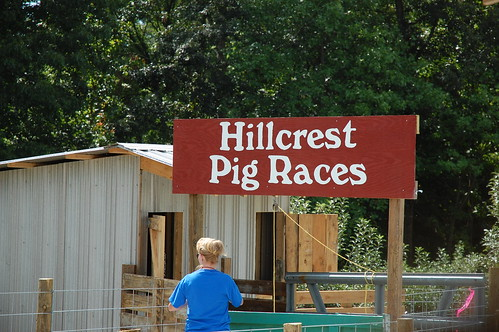 Waiting for pig races