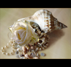Ocean love ... (juntos ( MOSTLY OFF)) Tags: ocean life friends sea roses shells love together enjoy sensational goldstar musictomyeyes abitofme goodvibes behappy justonelook beautysecret golddragon abigfave visiongroup richardsgroup infinestyle shinningstar heartsawards flickrshearts diamondgroup goldsealofquality theperfectphotographer goldstaraward dragonaward top25group imaginepoetry spiritofphotography multimegashot yrpreferredpictures photographersgonewild oracleofexcellence whitesoul passioninspirations lesamiesdupetitprince saariiysqualitypictures sublimemasterpiece rainbow11privategallery novusvita worlddazzilingshots novavitaexcellencegallery focusonbeauty thedantescircle themonalisasmile imagesforthelittleprince thecubeexcellencygallery firstofall goldenpowerclub richardssilvergroup richards50gold