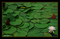 Mont Dol - tang du tertre (LUCKYONE31) Tags: france bretagne waterlilies 1001nights ohhh nenuphars abigfave anawesomeshot aplusphoto citrit theperfectphotographer gr8photo llovemypics luckyone31