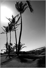 001 (conormichael) Tags: ocean sunset summer vacation canon golf eos hawaii waikiki oahu 1d kauai poipu 2008 markiii canonef70200f28isl canonef1635f28lii conormichael