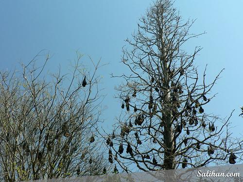 Bats in Botanic Gardens