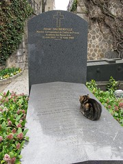 grave cats