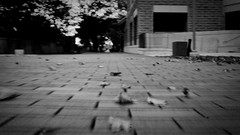 Blurr'ed ride (ARebbs) Tags: motion leaves bumpy walkway longboard