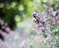 like a dream (Frau Koriander) Tags: 50mm bokeh nikond50 bremen f18 rhododendronpark hbw 25faves happybokehwednesday botanischergartenbremen nikkoraf50mmƒ18d