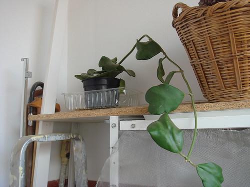 Mis plantas y sus flores 2955726414_a24c28bab7