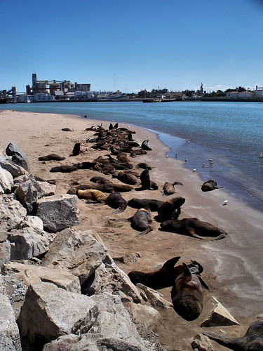 Sea Lion Colony, Necochea, Argentina by katiemetz, on Flickr
