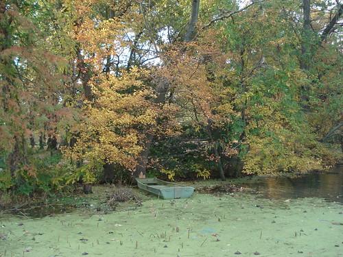 Kenilworth Aquatic Garden 013