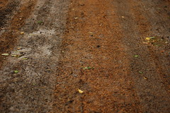 muddy road (this lyre lark) Tags: road brown leaves 50mm mud f18 needles d40 inthedirt