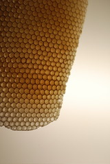 honeycomb (drewbam) Tags: europe gaud casamil