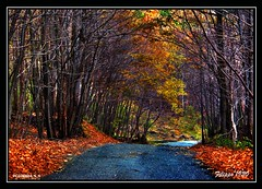 ITALY - SICILY - In the sloopes of the ETNA  -   PC076884_5_6 (Felipe 1930) Tags: wood trees italy searchthebest path chestnut sicily sentiero soe shiningstar visualart nel blueribbonwinner castagneto supershot bej fineartphotos golddragon mywinners abigfave royalgroup worldbest sparklingheart citrit theunforgettablepictures overtheexcellence goldsealofquality filippo1930 cristalaward betterthangood theperfectphotographer goldstaraward rubyphotographer ddsnet photographersgonewild sensationalcreationofexcellence photographerparadise thecontestgroup dragonflyawardgroup intheslopesoftheetna thrbestgallery