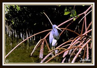 Bird in PBC