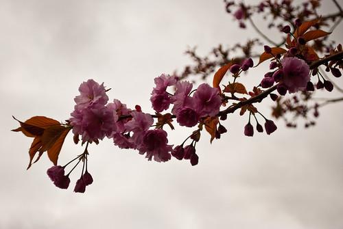 290410_ Blossom #2