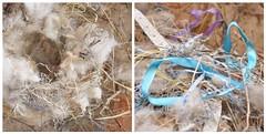 The Bird A Nest (Jenn (ovaunda)) Tags: utah nikon diptych cedarcity d90 18105mm jennovaunda ovaunda nikonnikkorafsdx18105mmf3556gedvr