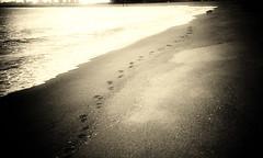 trace (moaan) Tags: dog film silhouette still corgi quiet dusk walk calm lomolca memory ripples welshcorgi 2008 stroll footprint tranquil ashiya thebeach hyogo recollection lull  retrace  wavelets recollect pochiko  ashiyahama gettyimagesjapanq1 gettyimagesjapanq2