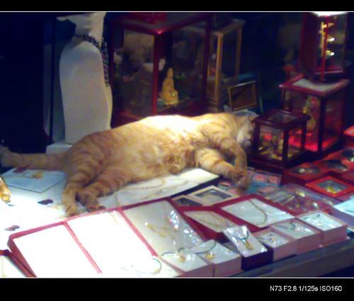 史上最貴小貓床