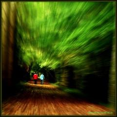 WALKING THROUGH THE FOREST. KILKENNY, IRELAND. (Edward Dullard Photography. Kilkenny, Ireland.) Tags: wood kilkenny ireland forest photographic eire magical emeraldisle enchanted dullard mywinners platinumphoto discoverireland edwarddullard goldstaraward societyedward