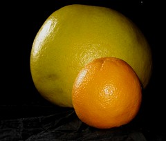 Pomelo vs Orange (2 of 3)