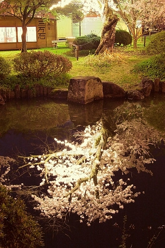 muramatsu park 1