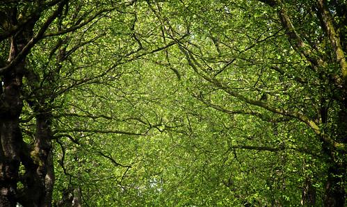 Green Park 05