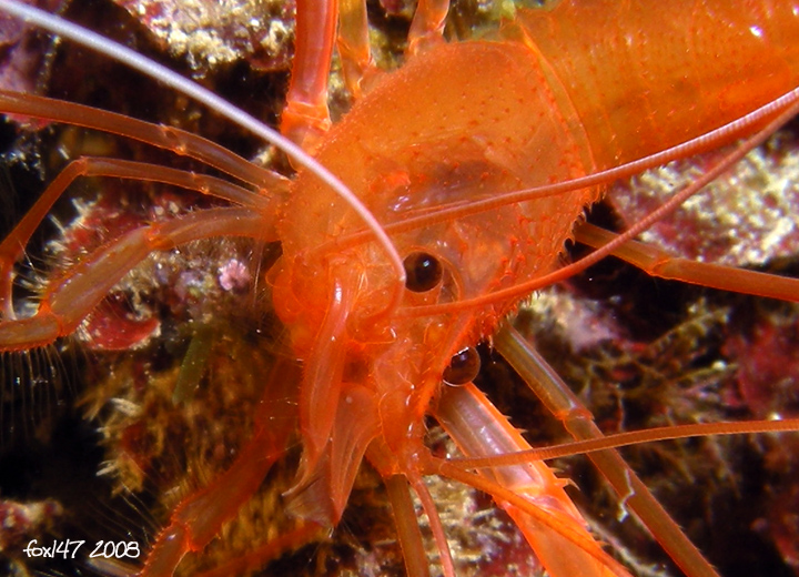 Color Arancio 2558329670_33ebc7e146_o