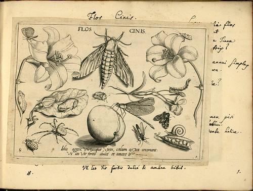 Archetypa studiaque patris - Joris Hoefnagel (1592) c