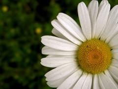 (Jared721) Tags: flower yellow bokeh pollen foundonthesideoftheroad canonpowershotsd950is