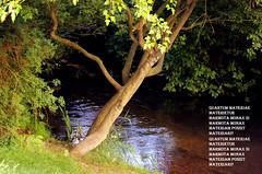 the creek (❁bluejay 2006❁) Tags: canada nature water creek stream trail thursday naturesfinest artisticexpression abigfave nikond40 chilliwackbc brillianteyejewel goldstaraward