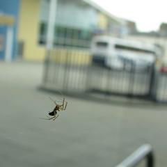 Gotta catch 'em all (kyz) Tags: macro square scotland spider edinburgh fountainpark